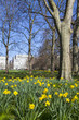 Springtim View of Green Park in London
