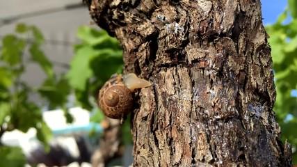 Un escargot sur un arbre en timelapse