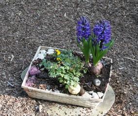 Schlichte Einpflanzung auf einem Grab