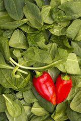 Red peppers on leaves of spinach