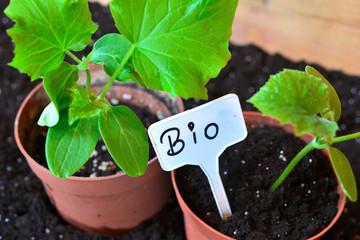 Gärtner Pflanzen Anzucht Erde