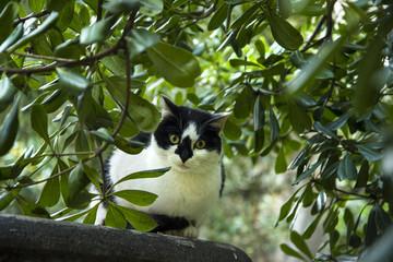 gatto tra i rami dell'albero