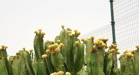 Cactus en un jardín de Lanzarote, islas Canarias