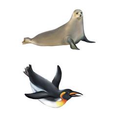 gentoo penguin. illustration isolated on white background