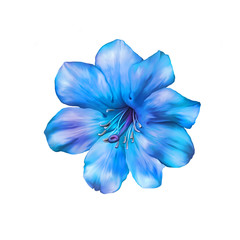 Beautiful bright blue Flower. Isolated on white. Illustration