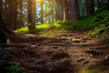 Waldweg bei Sonnenuntergang