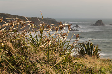 blades of grass in wind above West Coast in New Zealand