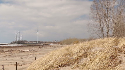 Wind Turbines and Beach Grasses in Wind