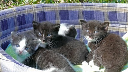 Portrait of four little kittens 2
