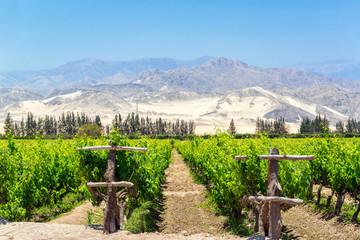 Lush Pisco Vineyard in Peru