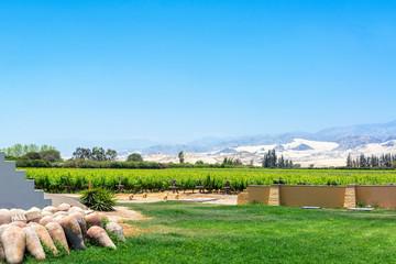 Pisco Vineyard in Peru