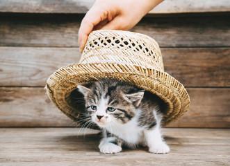 Kitten under the hat