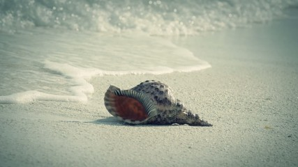 slow motion view of seashell on a sandy beach washed with waves