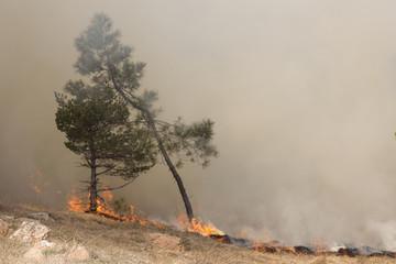 Incendio alle pendici di un bosco