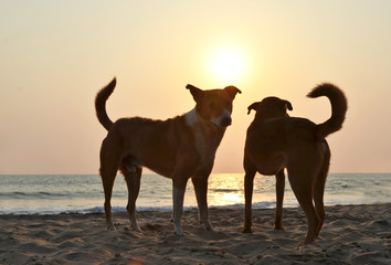 Pair of stray dogs on Agonda beach of South Goa, India