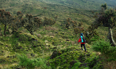 Hiker on their way to Mt.Cameroon