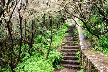 Treppe durch Regenwald auf La Gomera :)