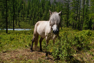 horse with forelock