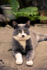 looking portrait cat