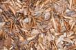 Herbst - Laub
