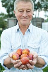 Senior Man On Allotment Holding Freshly Picked Apples