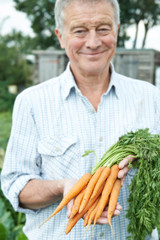 Senior Man On Allotment Holding Freshly Picked Carrots