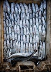pesce fish