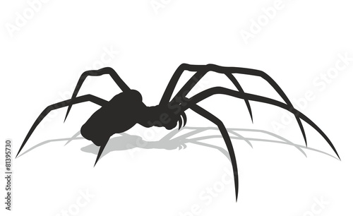 Black spider with a shadow. - 81395730