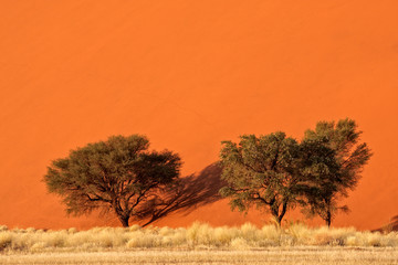 Sand dune and trees, Sossusvlei