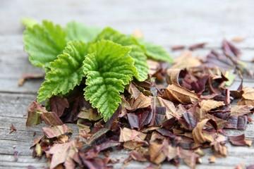 Brombeerblätter, Rubi fruticosi folium