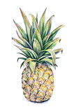 Pineapple on a white background. Watercolor illustration