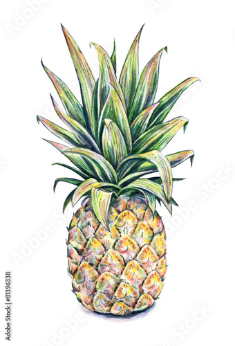 Pineapple on a white background. Watercolor illustration - 81396338