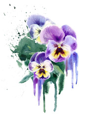 Watercolor purple flowers. Three violets (pansy)