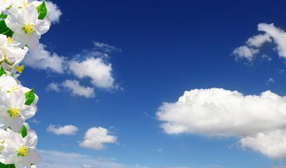 Apfelblüten, blauer Himmel, Wolken