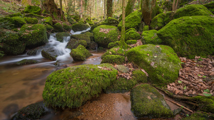 Bach im Schwarzwald