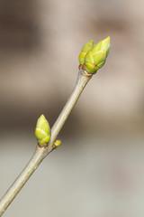 spring branch closeup