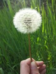 Esprimendo un desiderio