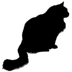 Furry cats silhouette in profile