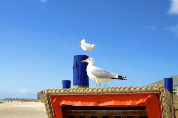 Möwen auf Strandkorb