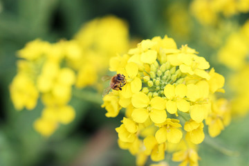 ミツバチただいま食事中
