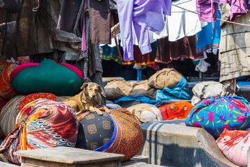 Dog at Dhobi Ghat: Mumbai, India's Laundry Slum