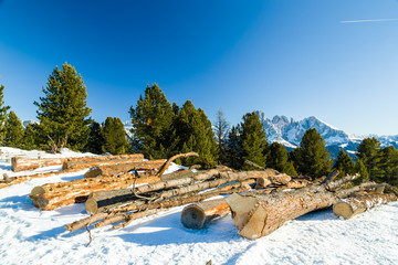 Cut wood logs in front of a panorama of snow-capped peaks
