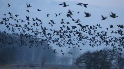 渡り鳥の飛来_7