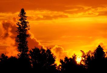 Tallest Tree at Sunrise