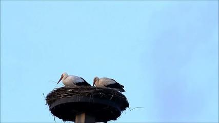 Storch im Nest beim Koten