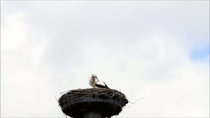 Storch allein im Nest im April
