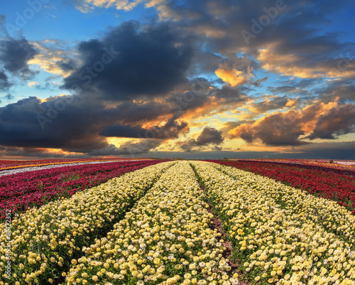 The field of yellow and red flowers