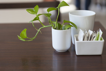 decorative plant on breakfast table with sugar pack and white co