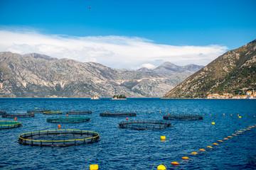 Fishing farm in Kotor bay