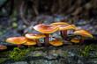 Leinwanddruck Bild - Flammulina - edible mushrooms